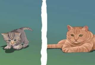 تعیین جنسیت گربه