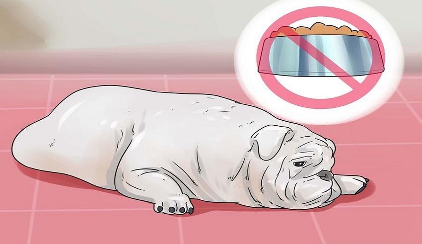 درمان اسهال سگ