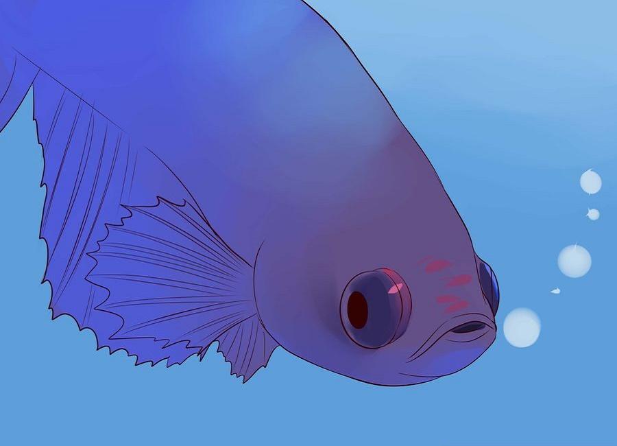 مشکل چشم ماهی فایتر
