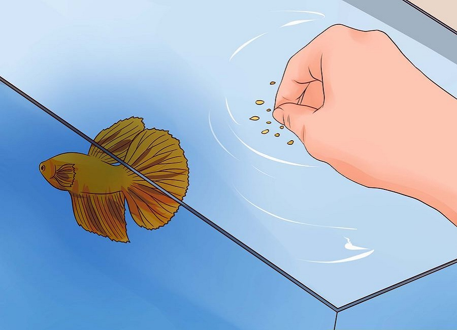 غذای ماهی فایتر