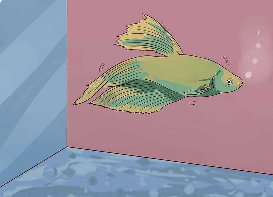 نقاشی ماهی فایتر