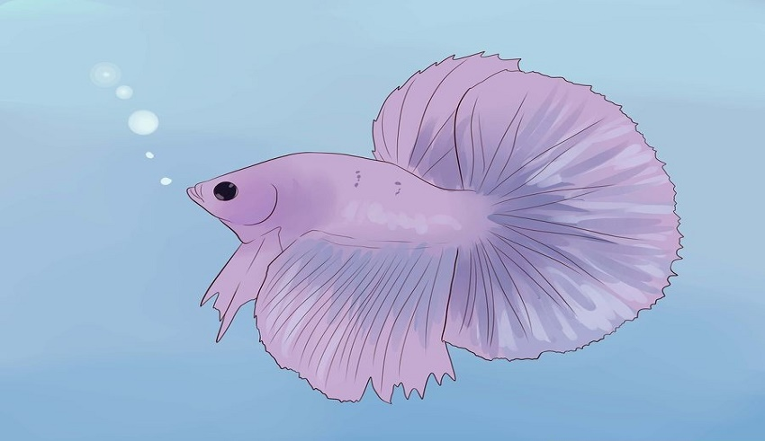بیماری های ماهی فایتر