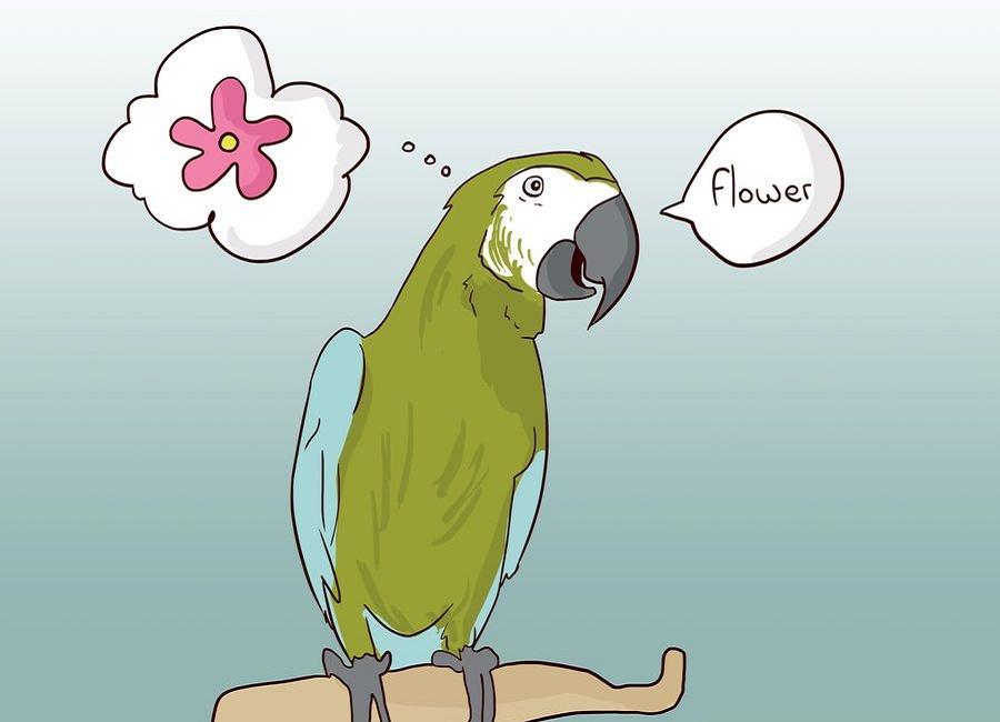 حرف زدن با پرنده