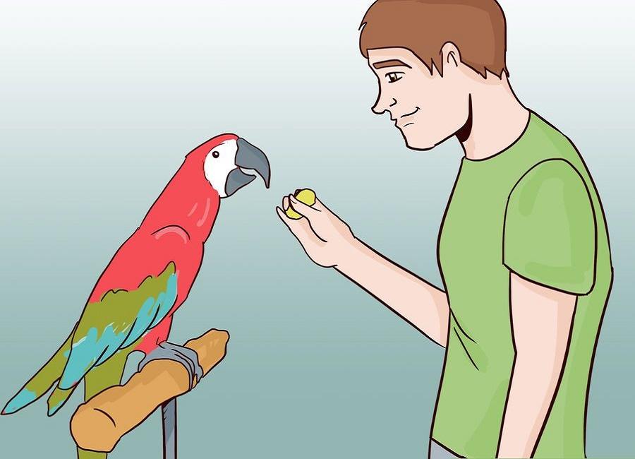 عکس پرنده سخنگو