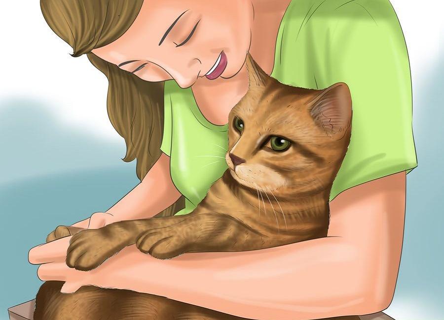 نوازش کردن گربه