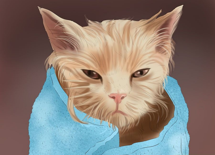 خشک کردن گربه