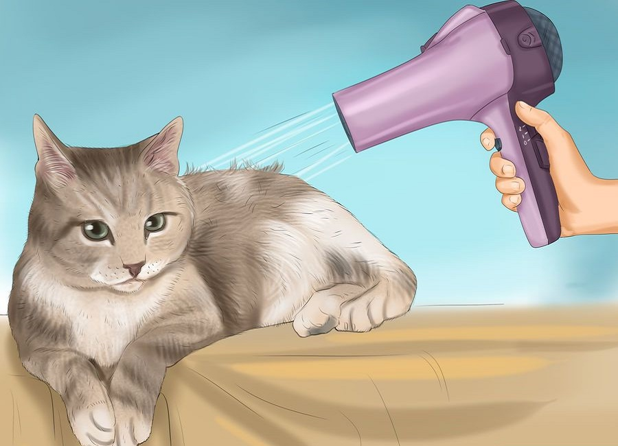 سشوار کشیدن گربه