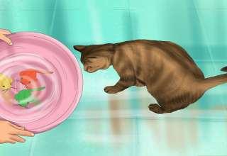 طرز صحیح شستن گربه