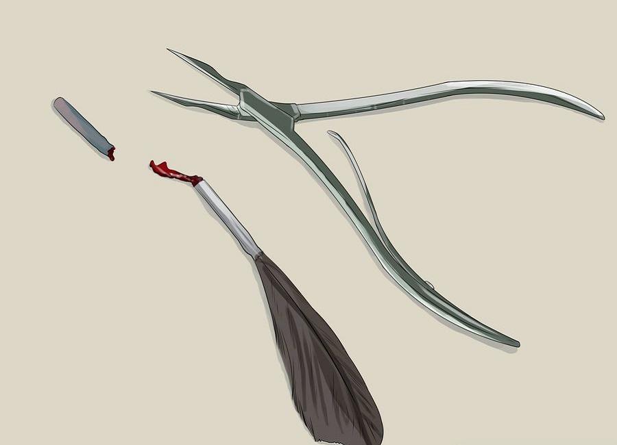 پرهای خونی پرنده طوطی