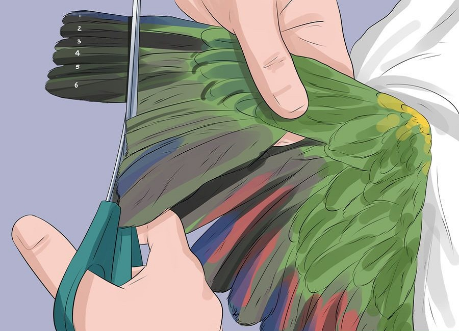 روش اصولی کوتاه کردن پرهای طوطی
