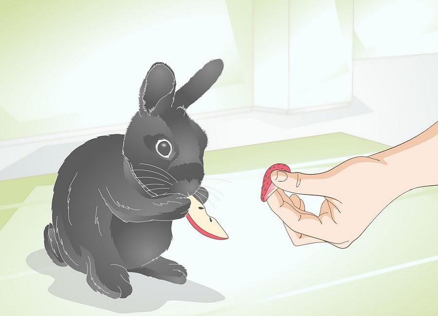 میوه برای خرگوش