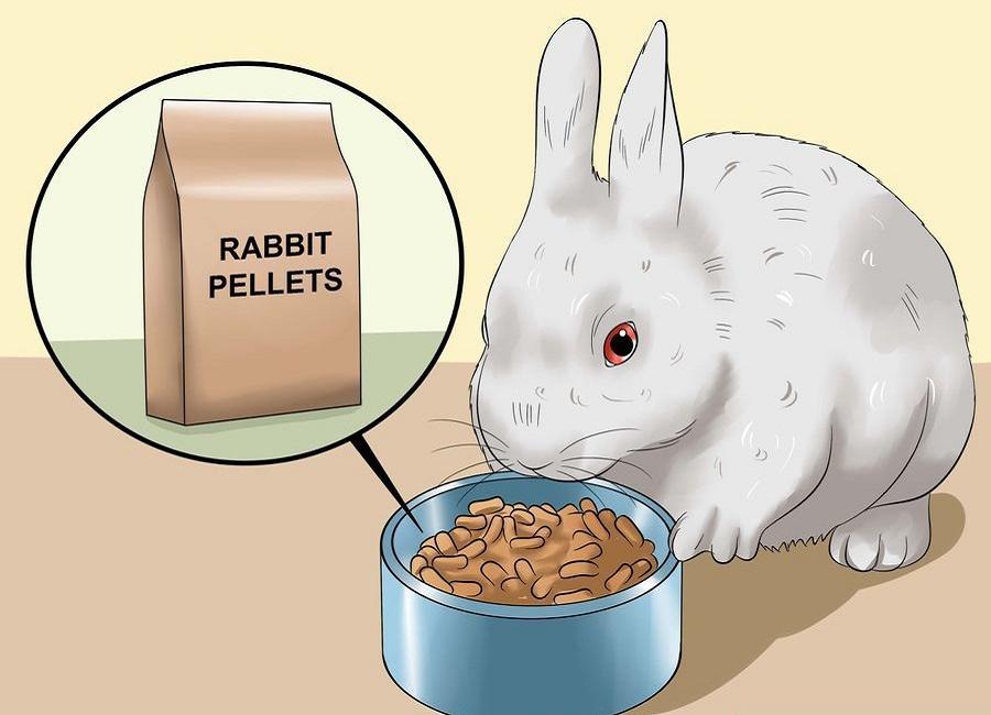 عکس نقاشی خرگوش