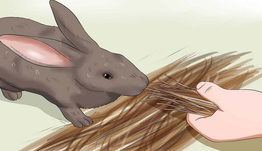 غذای مناسب خرگوش