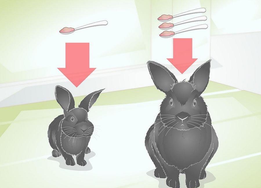 مقدار غذای خرگوش