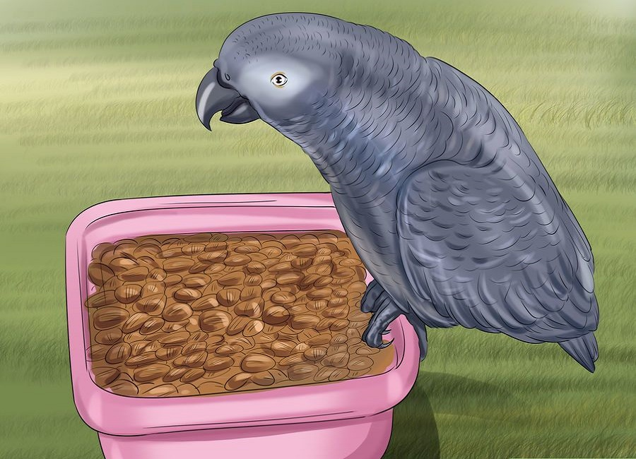 parrot food feed