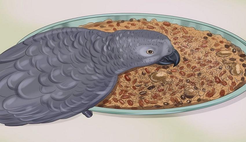 غذای مناسب برای طوطی
