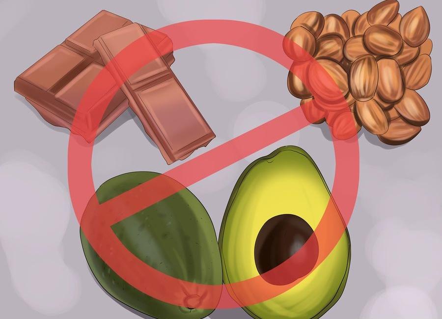 غذای مضر ممنوعه برای طوطی