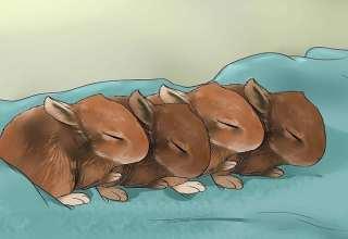 غذا دادن به بچه خرگوش