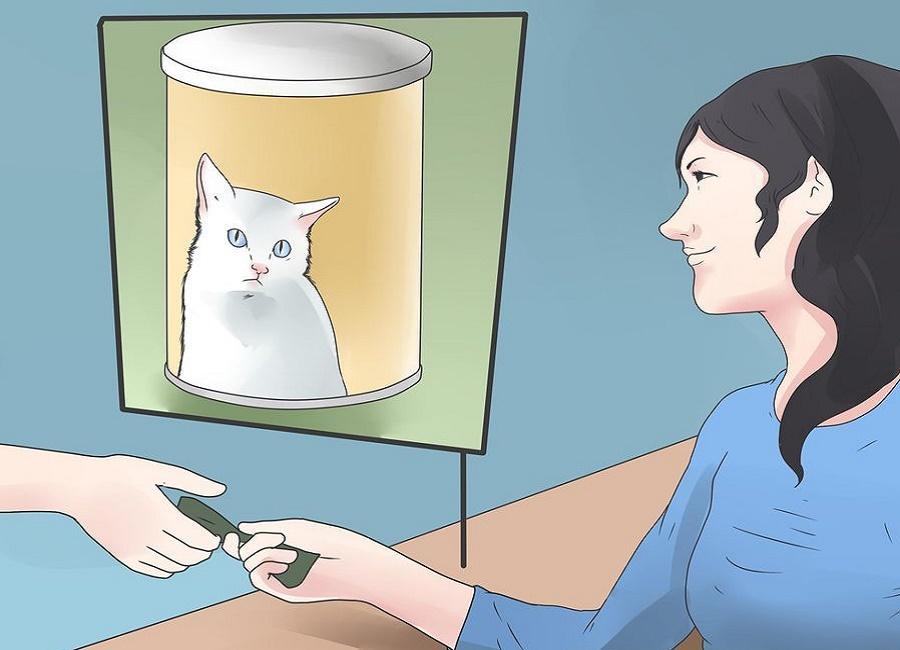 شیر و شیر خشک مخصوص گربه