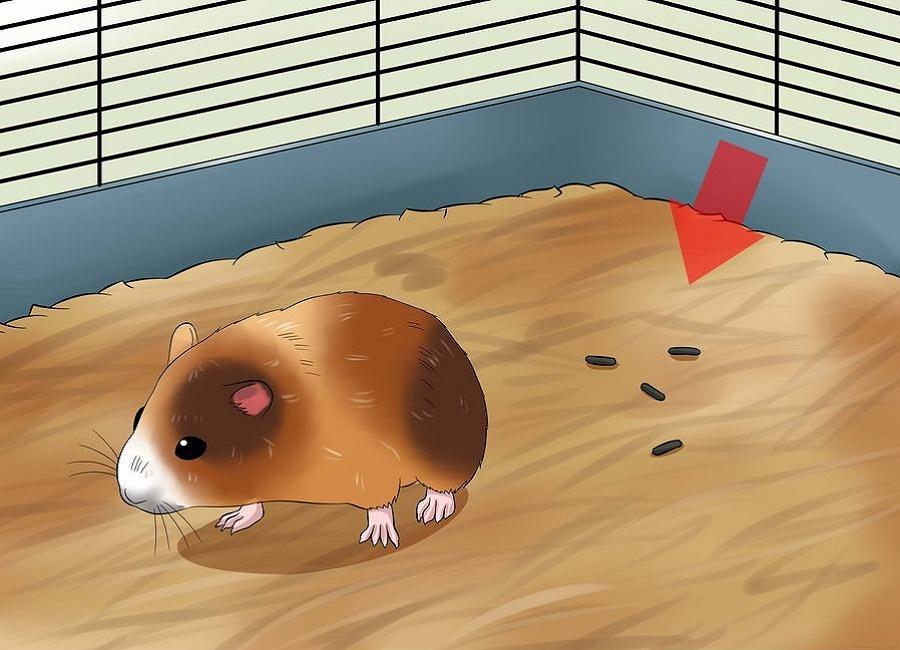 مدفوع همستر