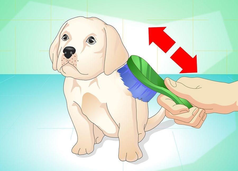 شانه کردن موی سگ
