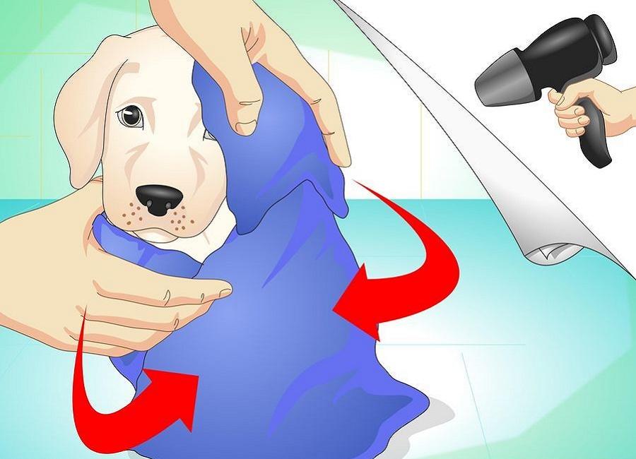 خشک کردن سگ بعد از حمام