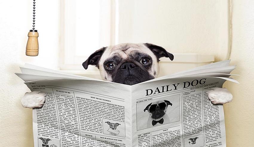 چه چیزی باعث اسهال در سگ میشود
