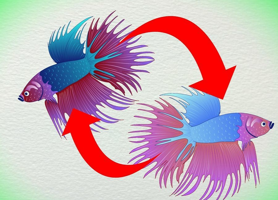 رنگ پریدگی ماهی فایتر