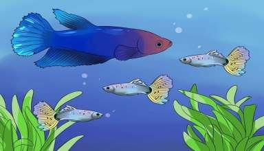تشخیص سن ماهی فایتر