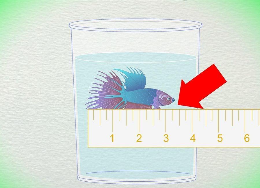 تعیین سن ماهی بتا