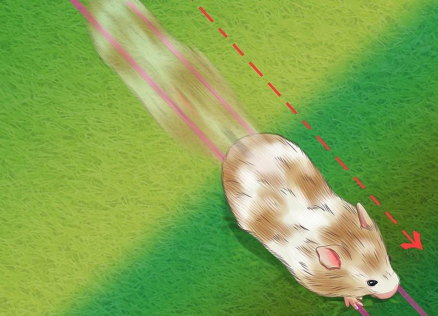 چرخیدن همستر به دور خود