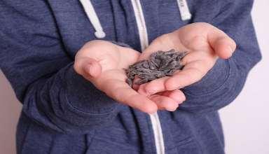 دستی غذا دادن به پرندگان