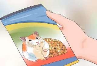 اصول غذا دادن به همستر