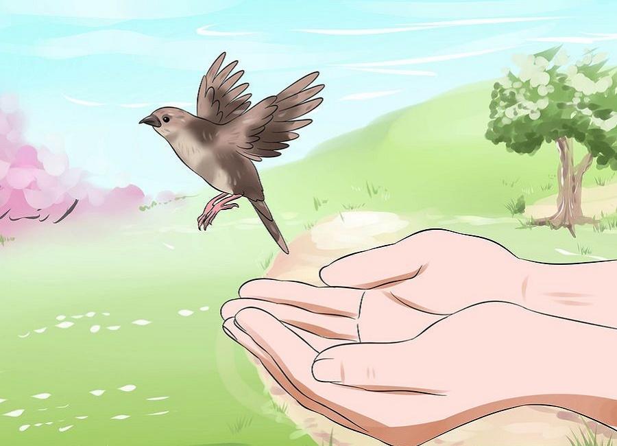 رها سازی جوجه پرنده در طبیعت
