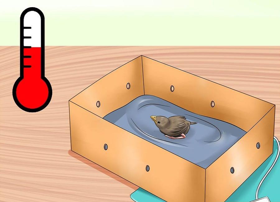 دمای بدن جوجه پرنده