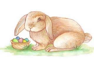 آموزش نقاشی خرگوش