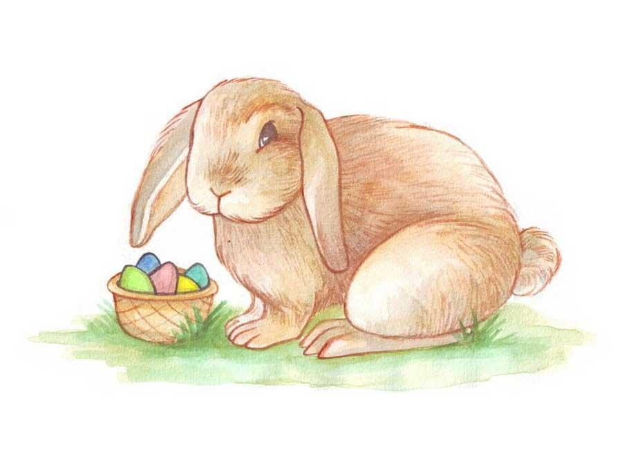 آموزش رنگ آمیزی نقاشی خرگوش