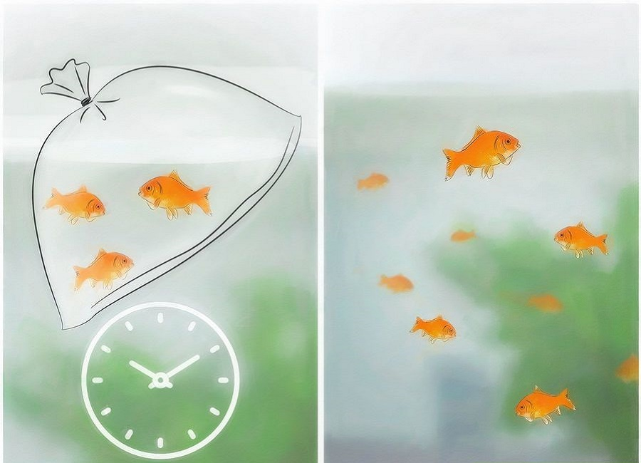 نقاشی ماهی قرمز
