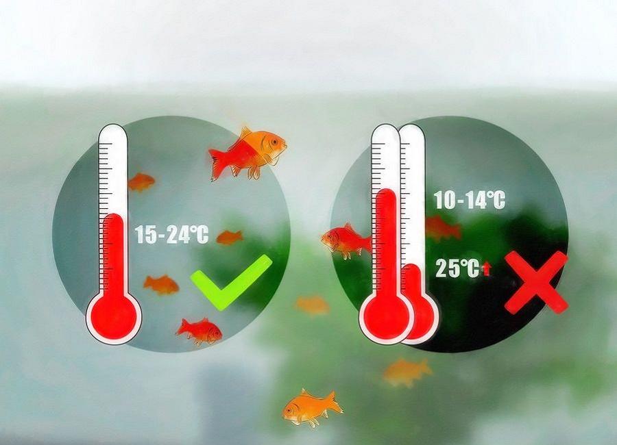 دمای مناسب آب ماهی قرمز
