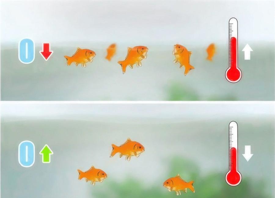 علت روی آب آمدن ماهی