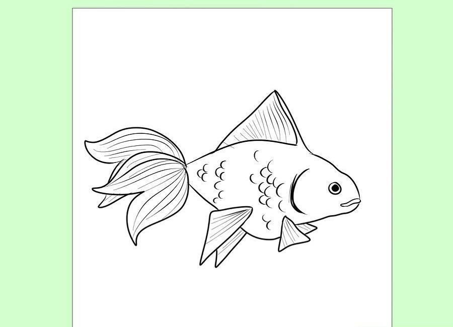 نقاشی کامل ماهی