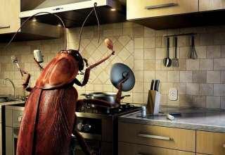 از بین بردن سوسک