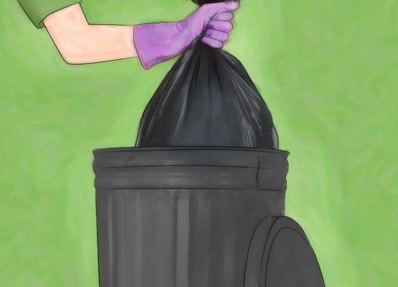 آشغال و سوسک