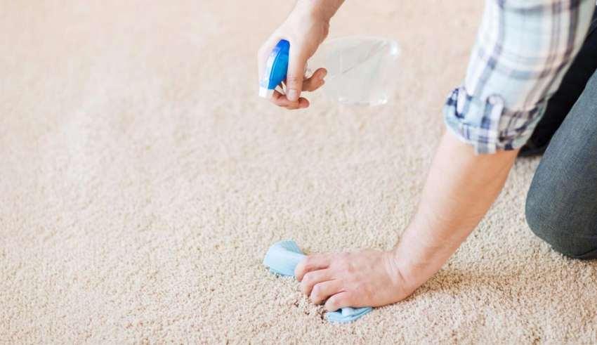 از بین بردن بوی ادرار روی فرش
