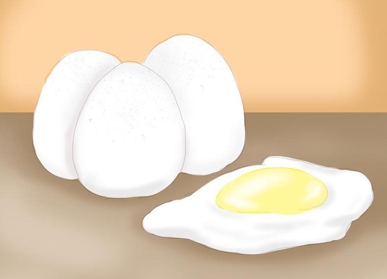 غذاهای پروتئین دار برای لاغری