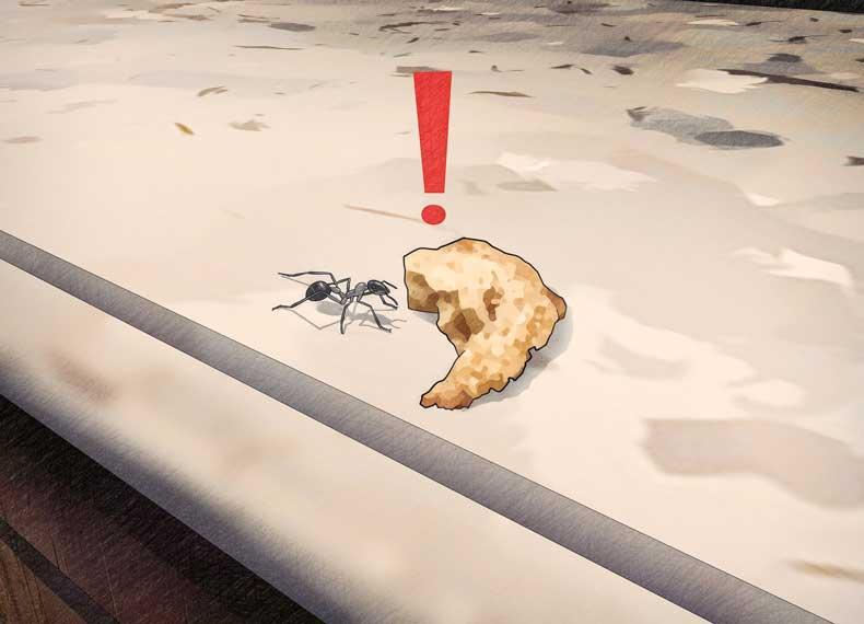 کشتن مورچه خانه