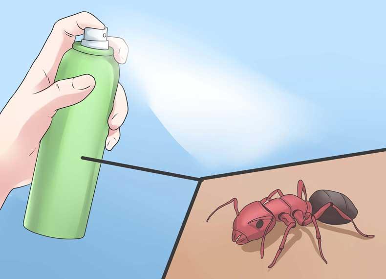 سم قوی برای مورچه