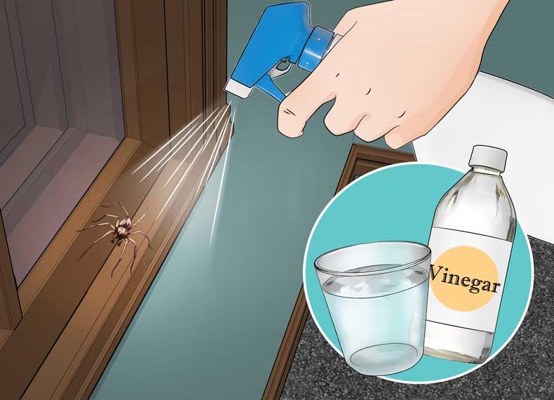 از بین بردن عنکبوت با سرکه