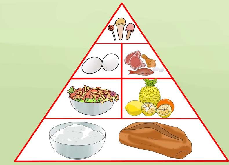 موادمغذی برای گیاهخواران