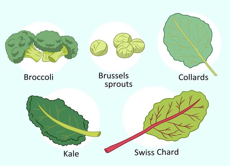 سبزیجات دارای کلسیم